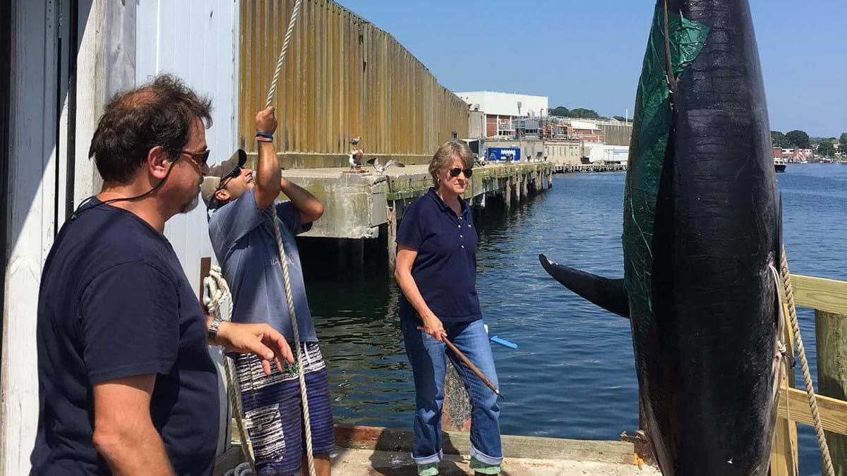 Reel it in, Wicked Tuna returns for season 9